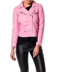 Summer Crop Biker Begonia Pink